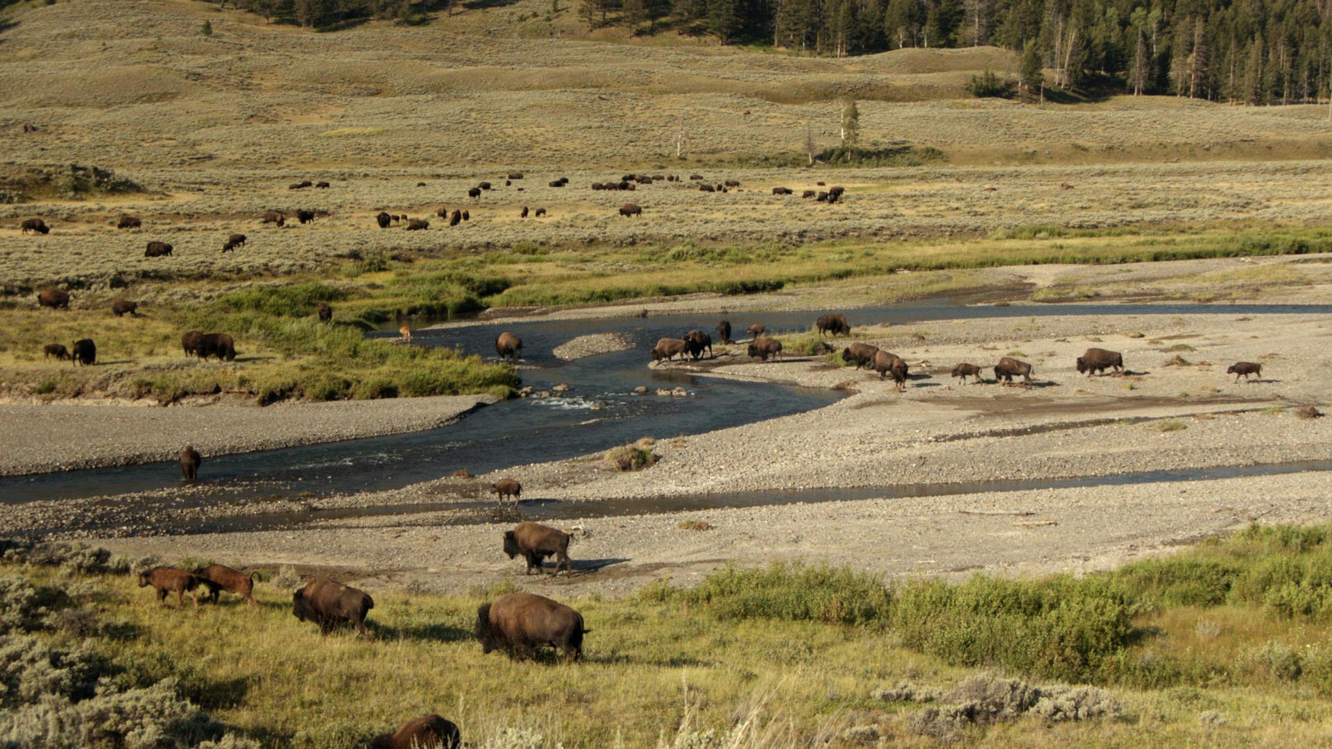 Yellowstone-Deutsch_0059