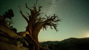 Yosemite bei Nacht